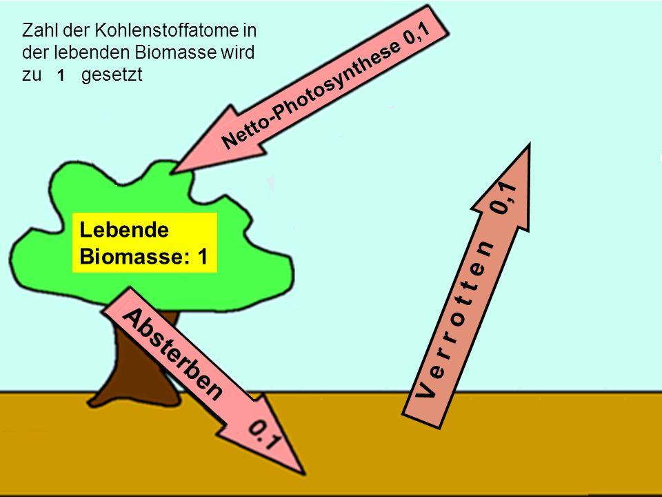 32 V e r r o t t e n 0,1 Lebende Biomasse: 1 Zahl der Kohlenstoffatome in der lebenden Biomasse wird zu 1 gesetzt