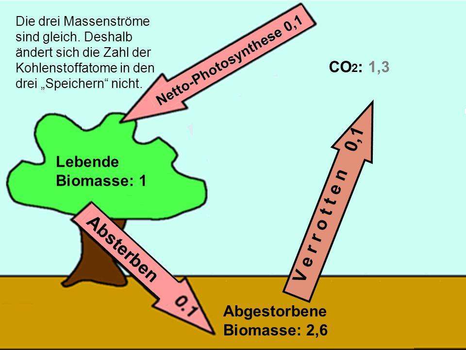36 V e r r o t t e n 0,1 Die drei Massenströme sind gleich. Deshalb ändert sich die Zahl der Kohlenstoffatome in den drei Speichern nicht. Lebende Bio