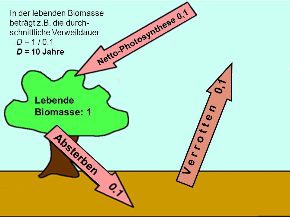 42 V e r r o t t e n 0,1 In der lebenden Biomasse beträgt z.B. die durch- schnittliche Verweildauer D = 1 / 0,1 D = 10 Jahre Lebende Biomasse: 1