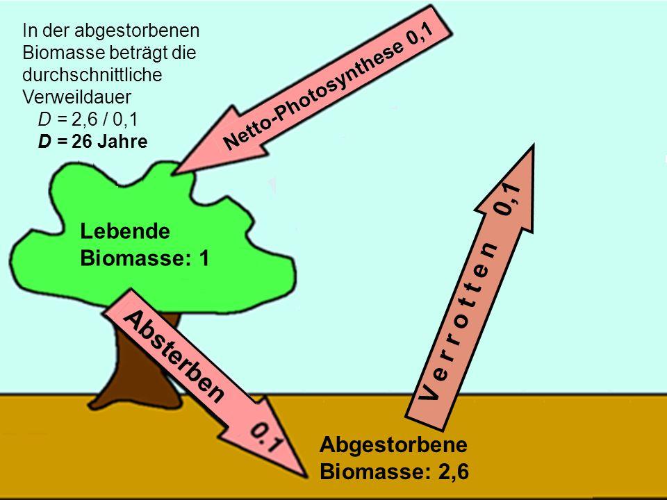 43 V e r r o t t e n 0,1 In der abgestorbenen Biomasse beträgt die durchschnittliche Verweildauer D = 2,6 / 0,1 D = 26 Jahre Lebende Biomasse: 1 Abges