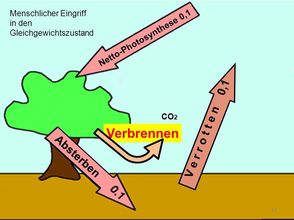 Verbrennen 44 V e r r o t t e n 0,1 CO 2 Menschlicher Eingriff in den Gleichgewichtszustand