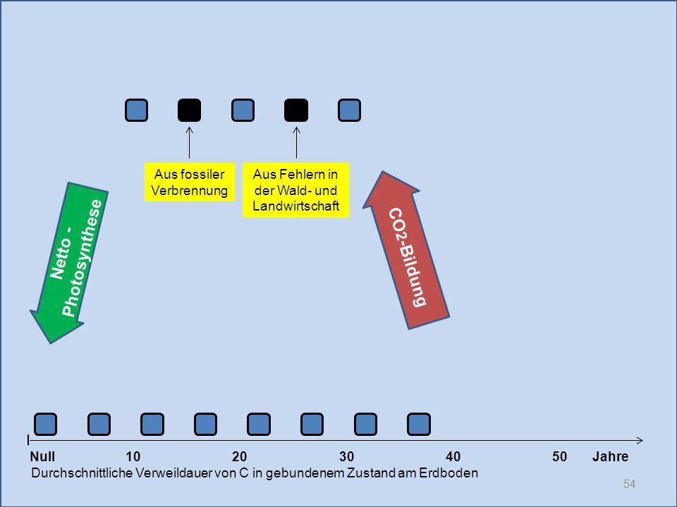 54 1020304050 Jahre Durchschnittliche Verweildauer von C in gebundenem Zustand am Erdboden CO 2 -Bildung Null Netto - Photosynthese Aus fossiler Verbr