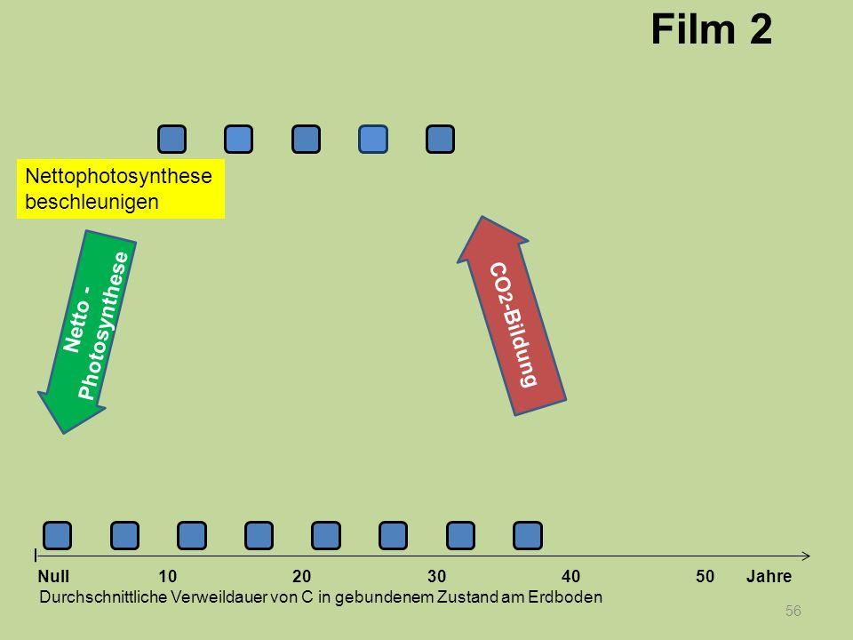 56 1020304050 Jahre Durchschnittliche Verweildauer von C in gebundenem Zustand am Erdboden CO 2 -Bildung Null Netto - Photosynthese Nettophotosynthese