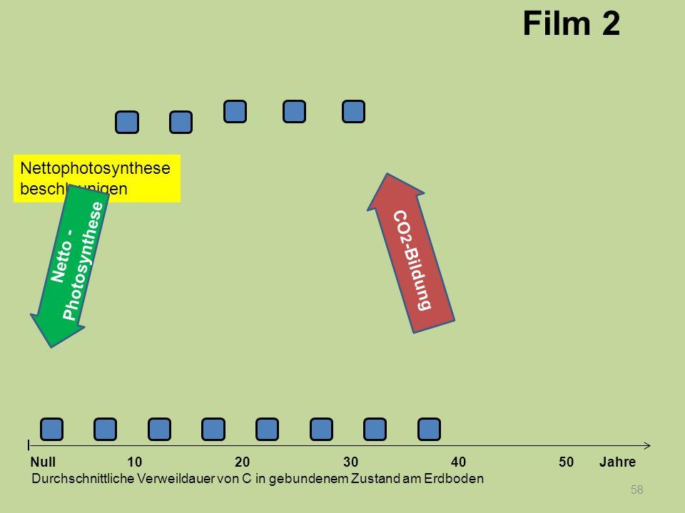 Nettophotosynthese beschleunigen 58 1020304050 Jahre Durchschnittliche Verweildauer von C in gebundenem Zustand am Erdboden Null Netto - Photosynthese