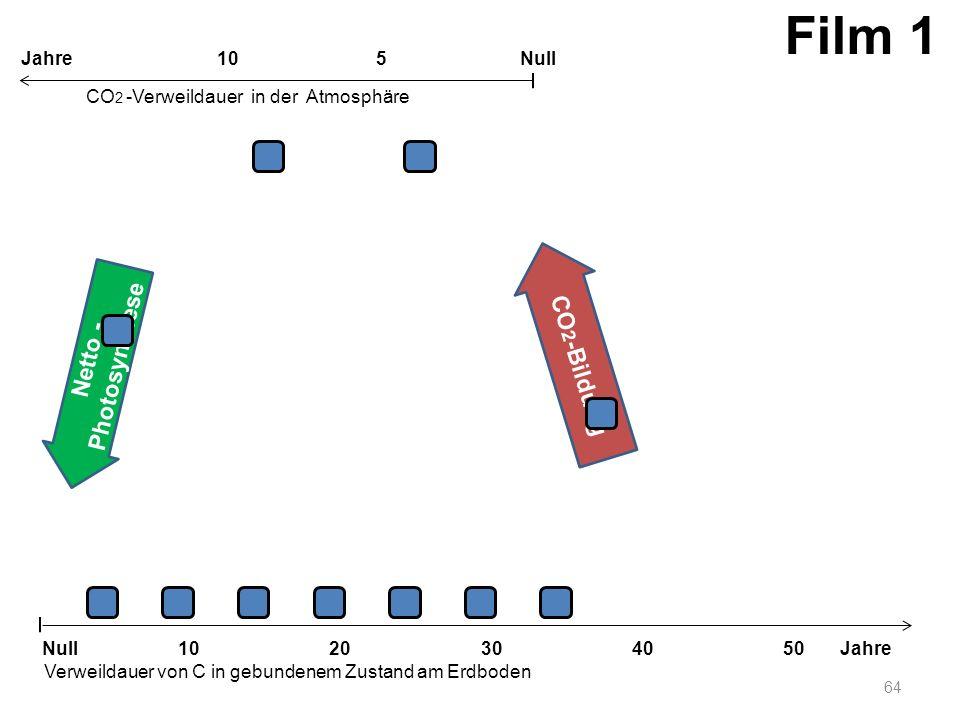 Netto - Photosynthese CO 2 -Bildung 64 1020304050 Jahre Verweildauer von C in gebundenem Zustand am Erdboden CO 2 -Verweildauer in der Atmosphäre Null