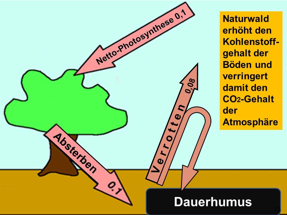 V e r r o t t e n 0,08 Dauerhumus Naturwald erhöht den Kohlenstoff- gehalt der Böden und verringert damit den CO 2 -Gehalt der Atmosphäre 134