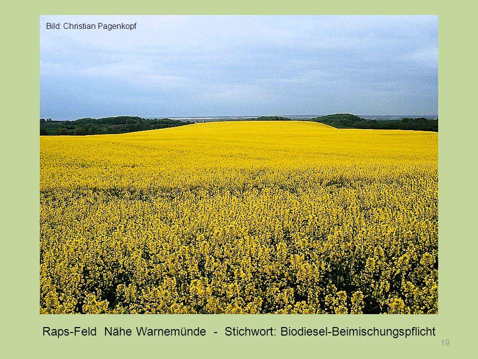 19 Raps-Feld Nähe Warnemünde - Stichwort: Biodiesel-Beimischungspflicht Bild: Christian Pagenkopf