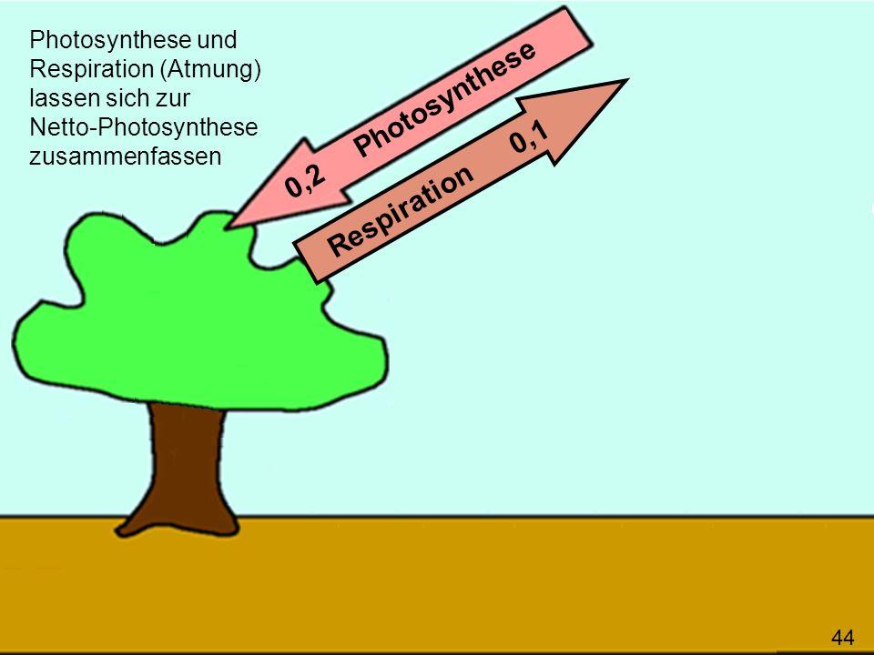 44 0,2 Photosynthese Respiration 0,1 Photosynthese und Respiration (Atmung) lassen sich zur Netto-Photosynthese zusammenfassen 44