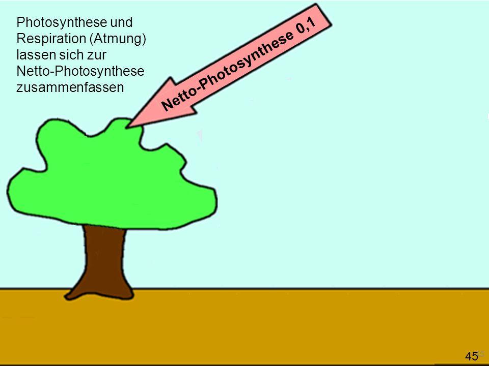Photosynthese und Respiration (Atmung) lassen sich zur Netto-Photosynthese zusammenfassen Netto-Photosynthese 0,1 45