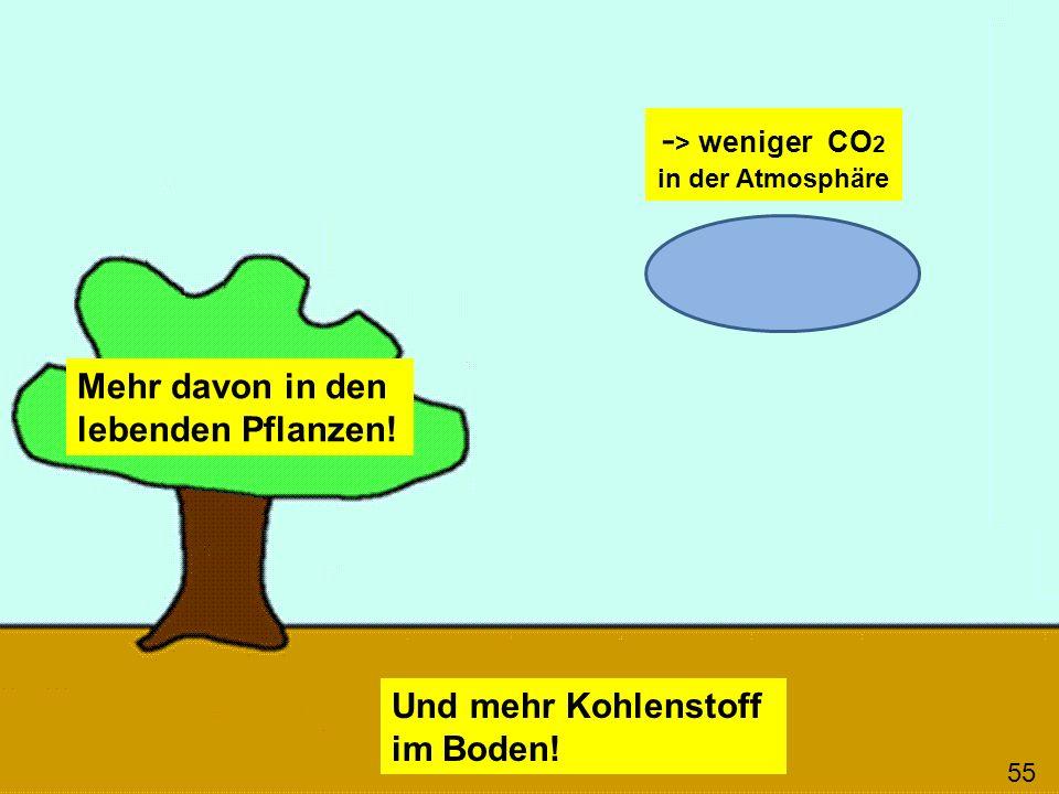 Mehr davon in den lebenden Pflanzen! Und mehr Kohlenstoff im Boden! 55 - > weniger CO 2 in der Atmosphäre