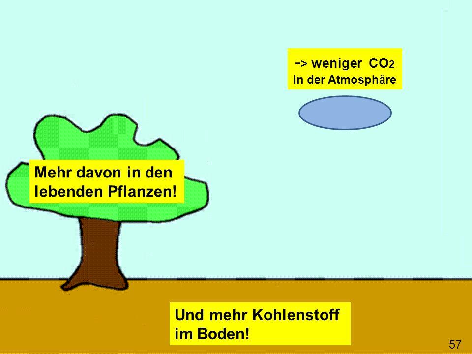 Mehr davon in den lebenden Pflanzen! Und mehr Kohlenstoff im Boden! 57 - > weniger CO 2 in der Atmosphäre
