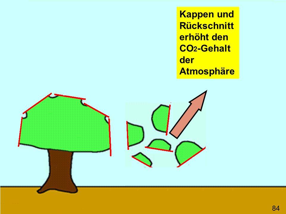 84 Kappen und Rückschnitt erhöht den CO 2 -Gehalt der Atmosphäre
