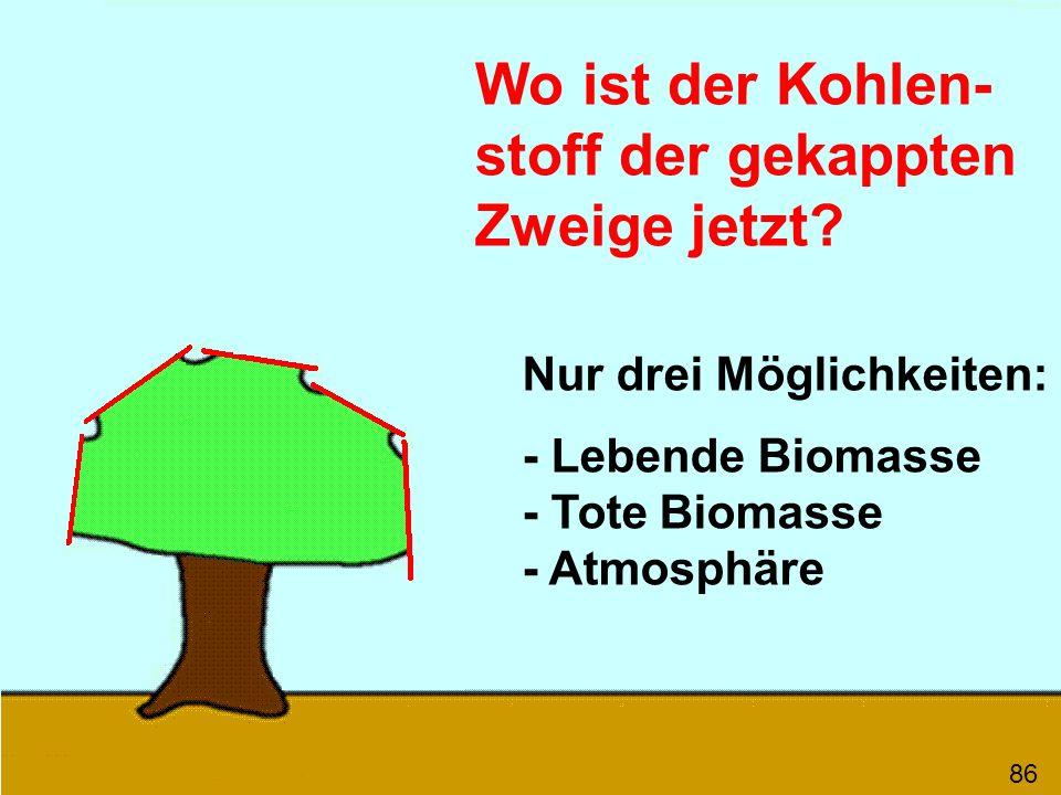 Wo ist der Kohlen- stoff der gekappten Zweige jetzt? Nur drei Möglichkeiten: - Lebende Biomasse - Tote Biomasse - Atmosphäre 86