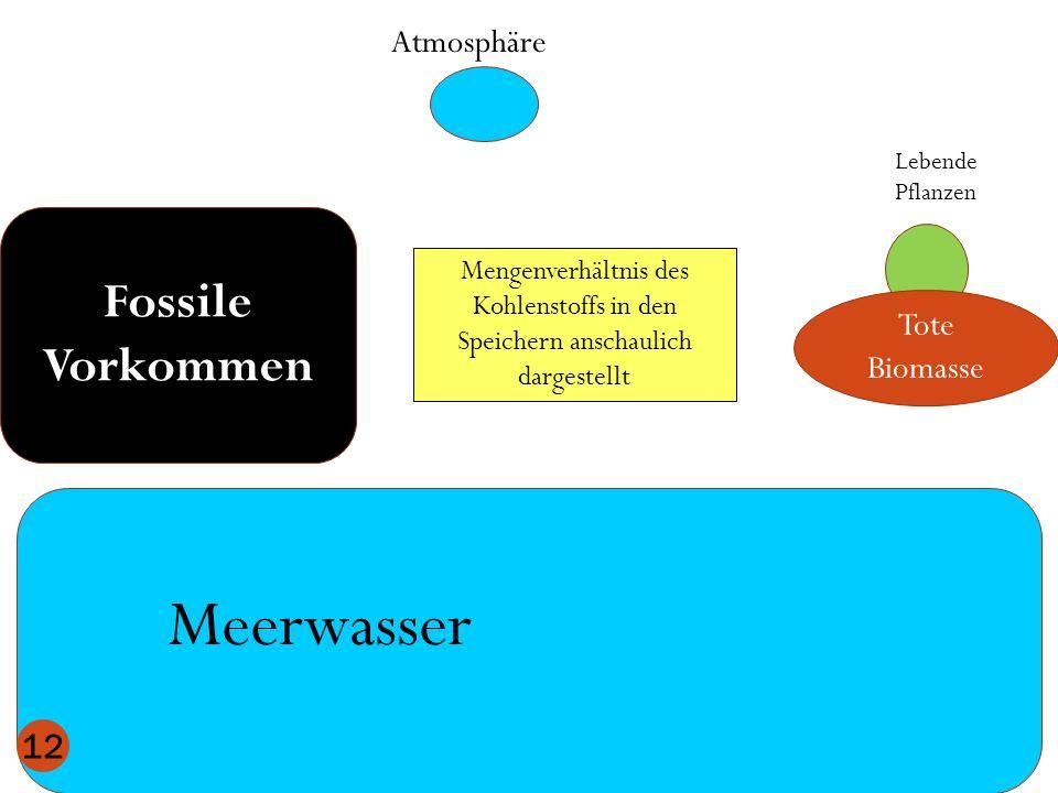Atmosphäre Meerwasser Lebende Pflanzen Fossile Vorkommen Tote Biomasse 12 Mengenverhältnis des Kohlenstoffs in den Speichern anschaulich dargestellt