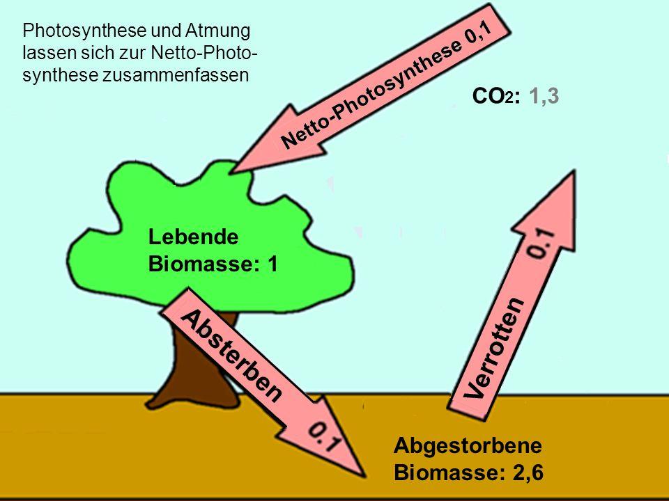 25 Lebende Biomasse: 1 Abgestorbene Biomasse: 2,6 CO 2 : 1,3 Photosynthese und Atmung lassen sich zur Netto-Photo- synthese zusammenfassen