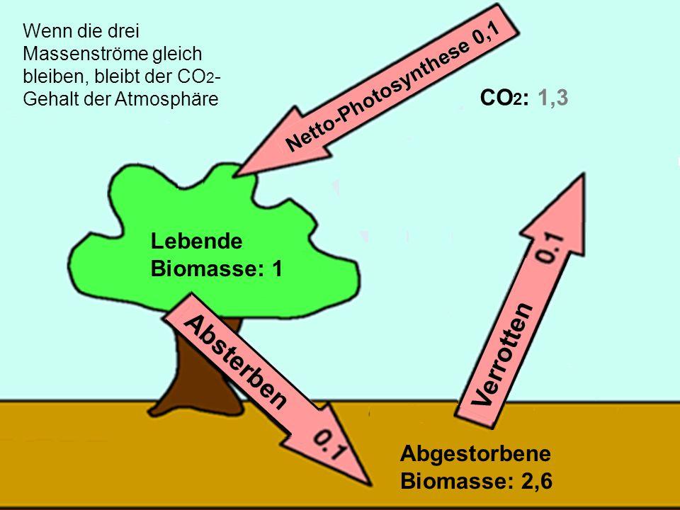 27 Lebende Biomasse: 1 Abgestorbene Biomasse: 2,6 CO 2 : 1,3 Wenn die drei Massenströme gleich bleiben, bleibt der CO 2 - Gehalt der Atmosphäre