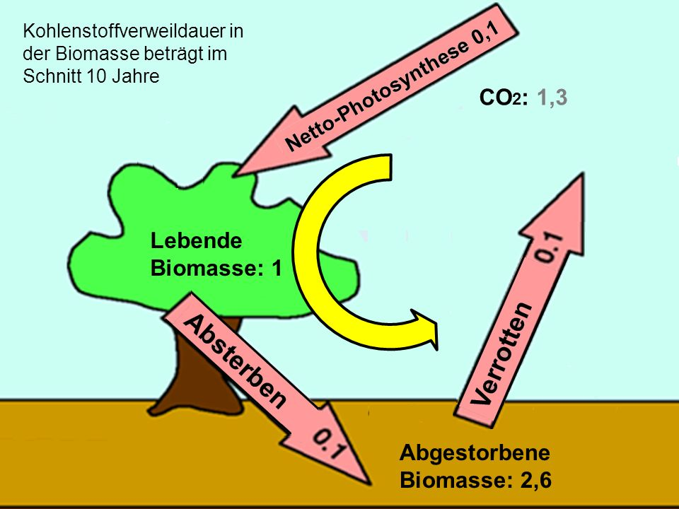 28 Lebende Biomasse: 1 Abgestorbene Biomasse: 2,6 CO 2 : 1,3 Kohlenstoffverweildauer in der Biomasse beträgt im Schnitt 10 Jahre
