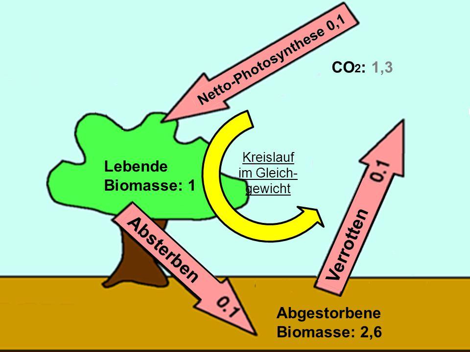 29 Lebende Biomasse: 1 Abgestorbene Biomasse: 2,6 CO 2 : 1,3 Kreislauf im Gleich- gewicht