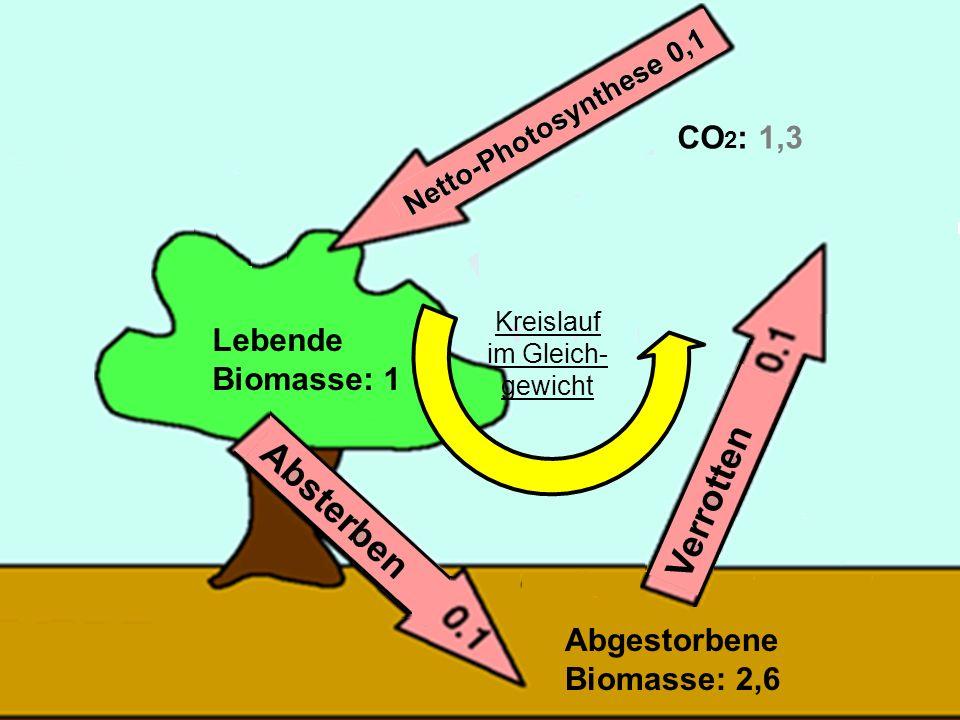 31 Lebende Biomasse: 1 Abgestorbene Biomasse: 2,6 CO 2 : 1,3 Kreislauf im Gleich- gewicht