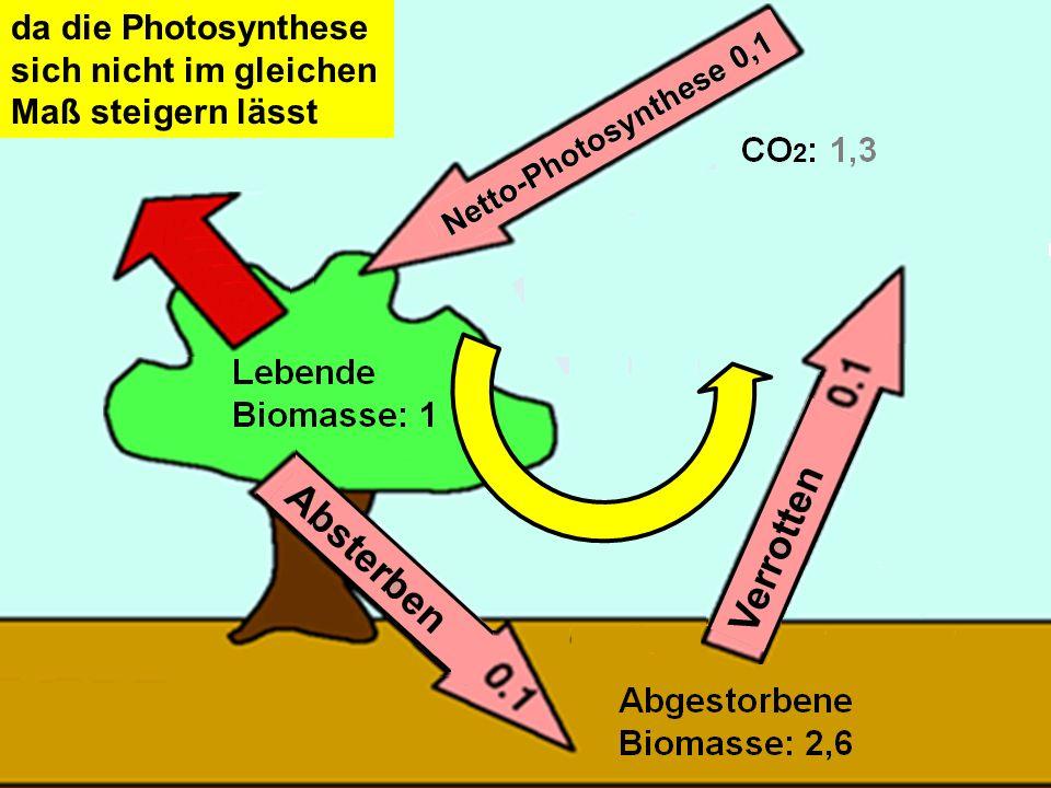 35 da die Photosynthese sich nicht im gleichen Maß steigern lässt