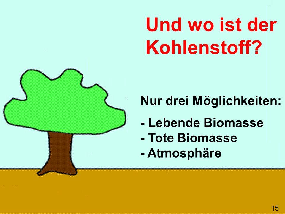 Und wo ist der Kohlenstoff? Nur drei Möglichkeiten: - Lebende Biomasse - Tote Biomasse - Atmosphäre 15