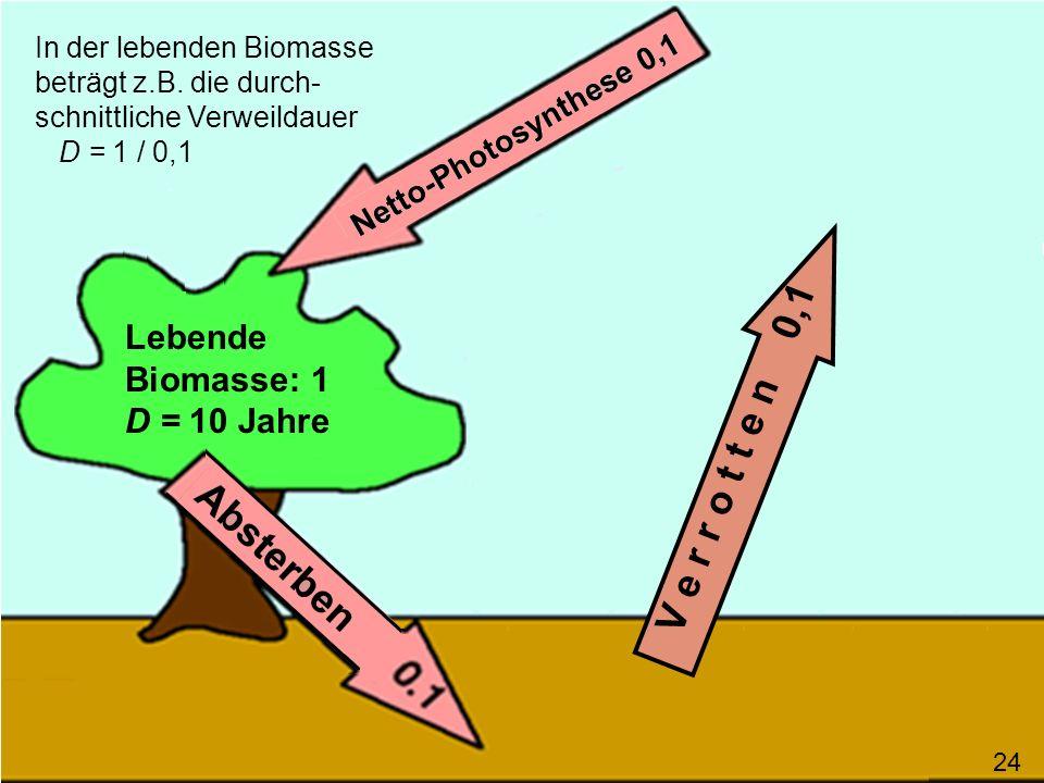 V e r r o t t e n 0,1 In der lebenden Biomasse beträgt z.B. die durch- schnittliche Verweildauer D = 1 / 0,1 Lebende Biomasse: 1 D = 10 Jahre 24