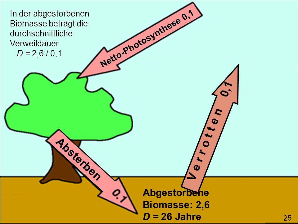 V e r r o t t e n 0,1 In der abgestorbenen Biomasse beträgt die durchschnittliche Verweildauer D = 2,6 / 0,1 Abgestorbene Biomasse: 2,6 D = 26 Jahre 2