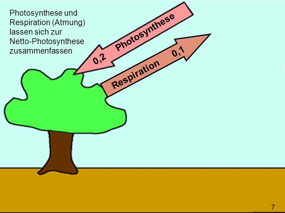7 0,2 Photosynthese Respiration 0,1 Photosynthese und Respiration (Atmung) lassen sich zur Netto-Photosynthese zusammenfassen 7