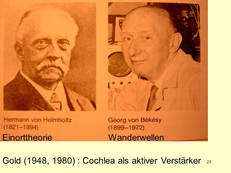 28 Helmholtz Bekesy Einorttheorie Gold (1948, 1980) : Cochlea als aktiver Verstärker Wanderwellen