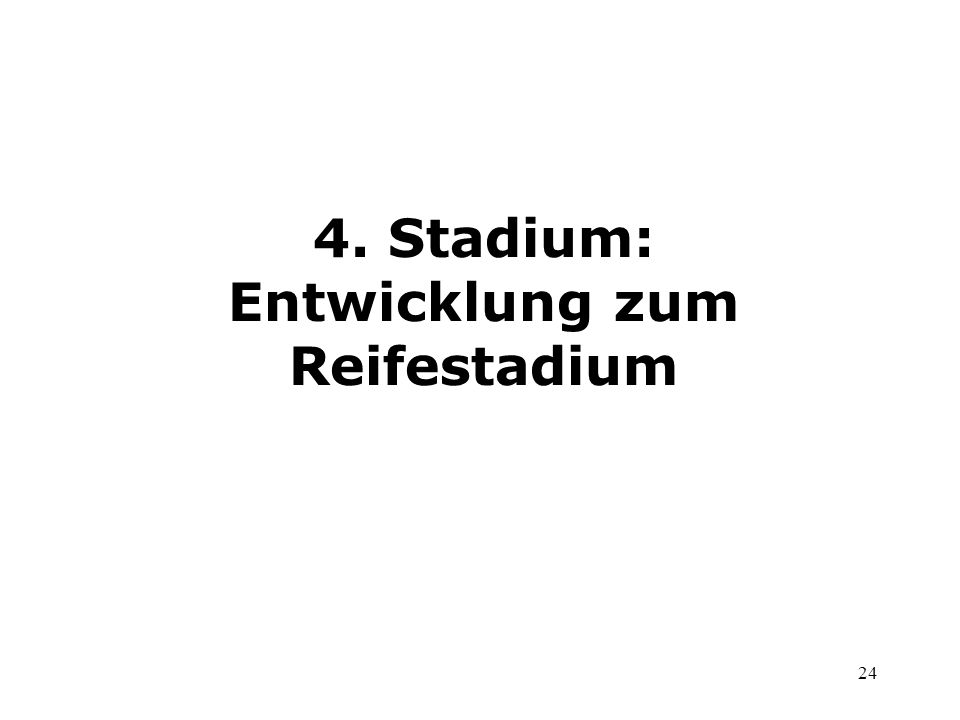 24 4. Stadium: Entwicklung zum Reifestadium
