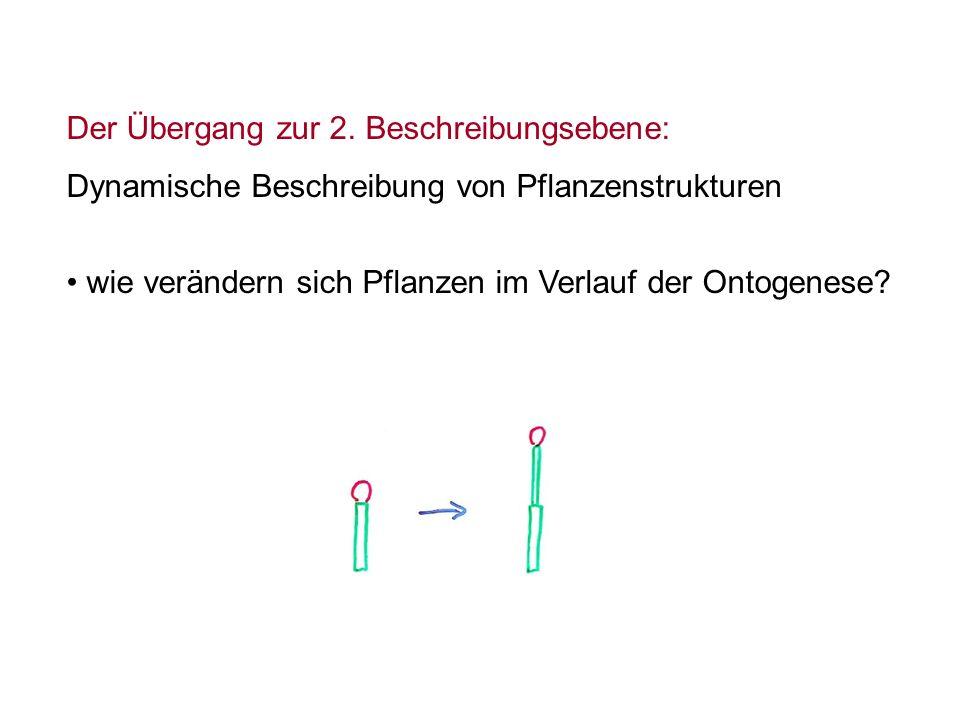 Der Übergang zur 2. Beschreibungsebene: Dynamische Beschreibung von Pflanzenstrukturen wie verändern sich Pflanzen im Verlauf der Ontogenese?
