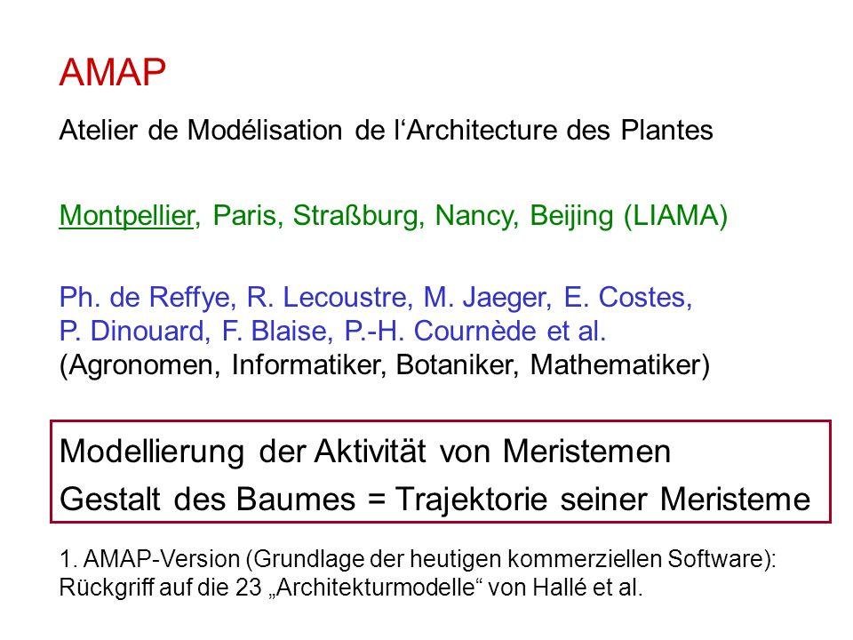 AMAP Atelier de Modélisation de lArchitecture des Plantes Montpellier, Paris, Straßburg, Nancy, Beijing (LIAMA) Ph. de Reffye, R. Lecoustre, M. Jaeger