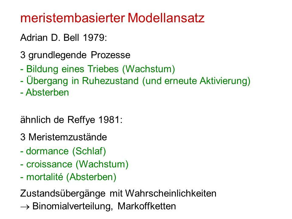 meristembasierter Modellansatz Adrian D. Bell 1979: 3 grundlegende Prozesse - Bildung eines Triebes (Wachstum) - Übergang in Ruhezustand (und erneute