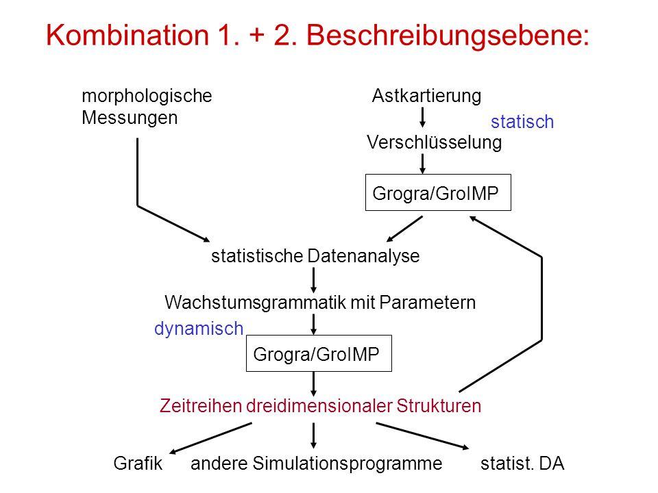 Kombination 1. + 2. Beschreibungsebene: morphologische Messungen Astkartierung Verschlüsselung Grogra/GroIMP statistische Datenanalyse Wachstumsgramma