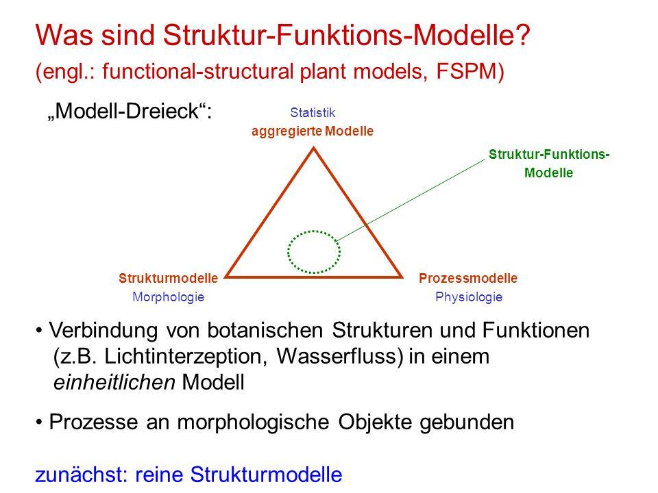 Was sind Struktur-Funktions-Modelle? (engl.: functional-structural plant models, FSPM) Modell-Dreieck: Verbindung von botanischen Strukturen und Funkt