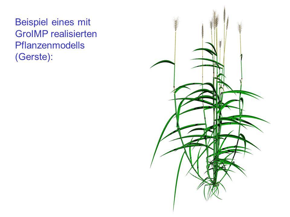 Beispiel eines mit GroIMP realisierten Pflanzenmodells (Gerste):