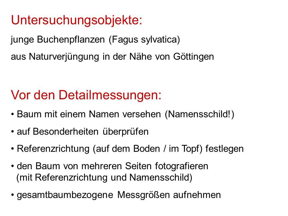 Untersuchungsobjekte: junge Buchenpflanzen (Fagus sylvatica) aus Naturverjüngung in der Nähe von Göttingen Vor den Detailmessungen: Baum mit einem Namen versehen (Namensschild!) auf Besonderheiten überprüfen Referenzrichtung (auf dem Boden / im Topf) festlegen den Baum von mehreren Seiten fotografieren (mit Referenzrichtung und Namensschild) gesamtbaumbezogene Messgrößen aufnehmen