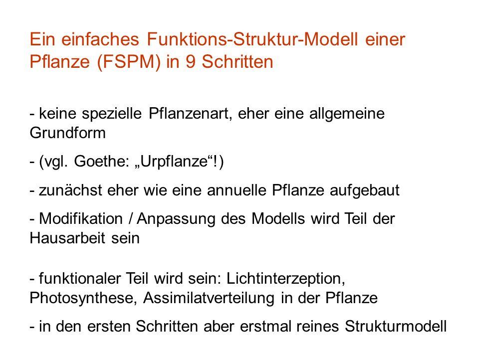 Ein einfaches Funktions-Struktur-Modell einer Pflanze (FSPM) in 9 Schritten - keine spezielle Pflanzenart, eher eine allgemeine Grundform - (vgl. Goet