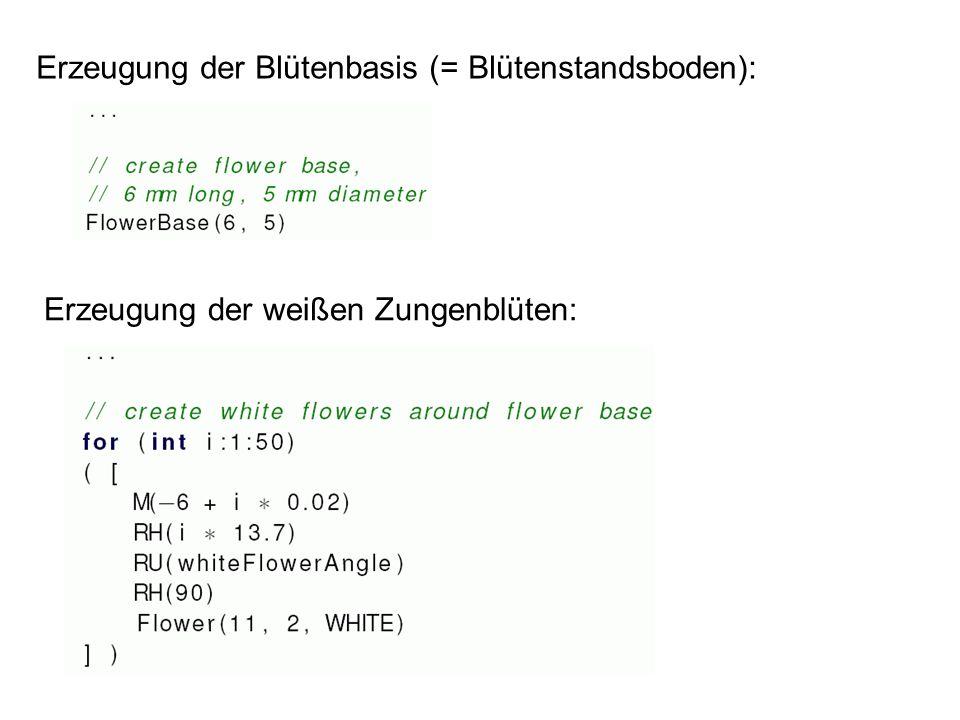 Erzeugung der Blütenbasis (= Blütenstandsboden): Erzeugung der weißen Zungenblüten: