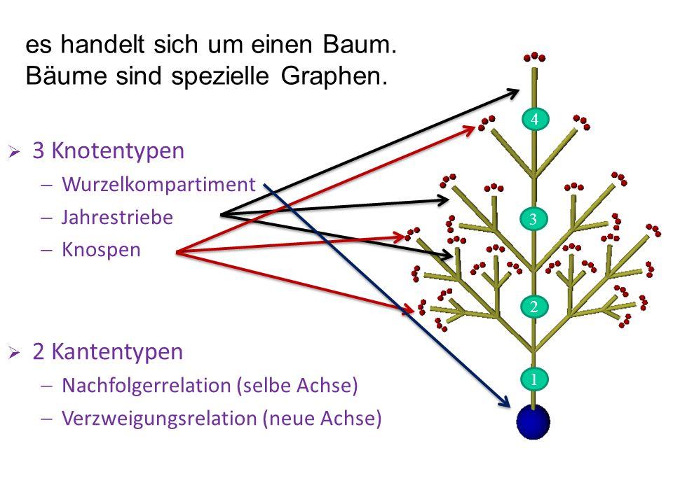 3 Knotentypen Wurzelkompartiment Jahrestriebe Knospen 2 Kantentypen Nachfolgerrelation (selbe Achse) Verzweigungsrelation (neue Achse) es handelt sich um einen Baum.