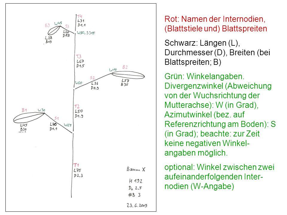 Rot: Namen der Internodien, (Blattstiele und) Blattspreiten Schwarz: Längen (L), Durchmesser (D), Breiten (bei Blattspreiten; B) Grün: Winkelangaben.