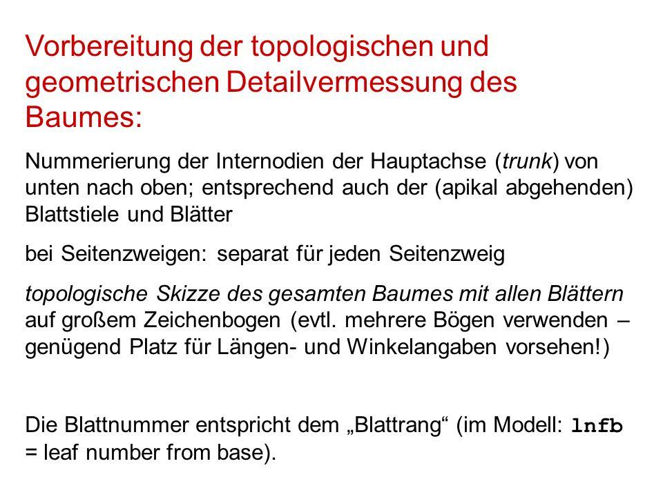 Rot: Namen der Internodien, Blattstiele und Blattspreiten Schwarz: Längen (L), Durchmesser (D), Breiten (bei Blattspreiten; B), Reifeklassen (bei Blattspreiten; MC) Grün: Winkelangaben.