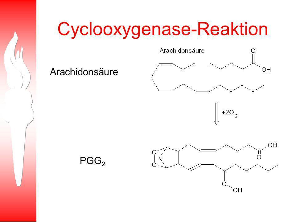 Cyclooxygenase-Reaktion Arachidonsäure PGG 2