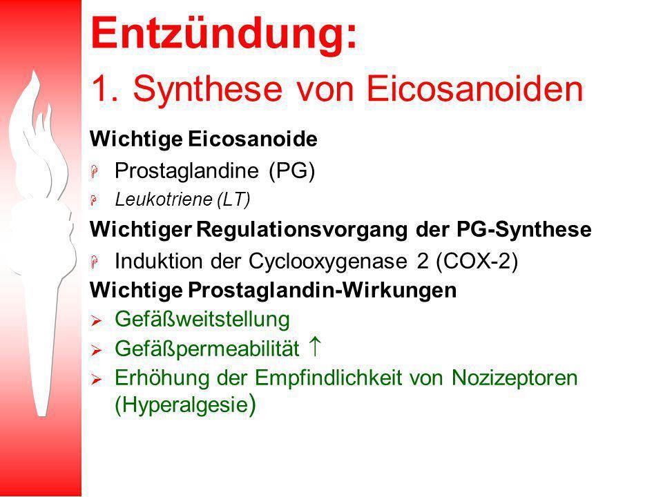 Entzündung: 1. Synthese von Eicosanoiden Wichtige Eicosanoide H Prostaglandine (PG) H Leukotriene (LT) Wichtiger Regulationsvorgang der PG-Synthese H