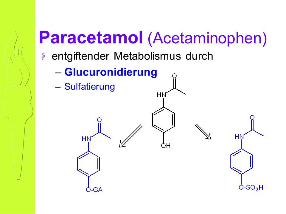 Paracetamol (Acetaminophen) H entgiftender Metabolismus durch –Glucuronidierung –Sulfatierung