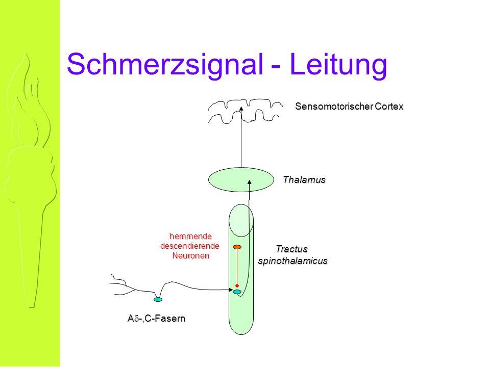 Schmerzsignal - Leitung A -,C-Fasern Tractusspinothalamicus Thalamus Sensomotorischer Cortex hemmendedescendierendeNeuronen
