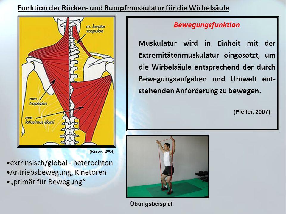 Bewegungsfunktion Muskulatur wird in Einheit mit der Extremitätenmuskulatur eingesetzt, um die Wirbelsäule entsprechend der durch Bewegungsaufgaben un