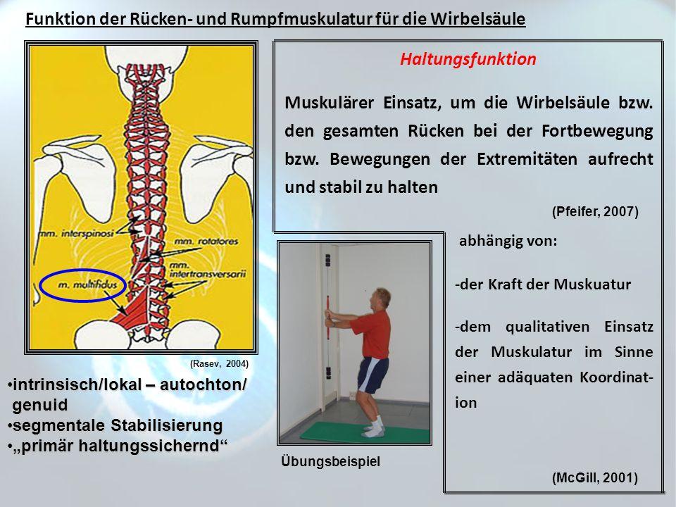 (Pfeifer, 2007) Funktion der Rücken- und Rumpfmuskulatur für die Wirbelsäule intrinsisch/lokal – autochton/intrinsisch/lokal – autochton/ genuid genui