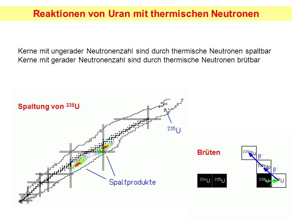 Brüten Kerne mit ungerader Neutronenzahl sind durch thermische Neutronen spaltbar Kerne mit gerader Neutronenzahl sind durch thermische Neutronen brüt