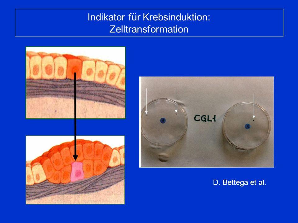 D. Bettega et al. Indikator für Krebsinduktion: Zelltransformation